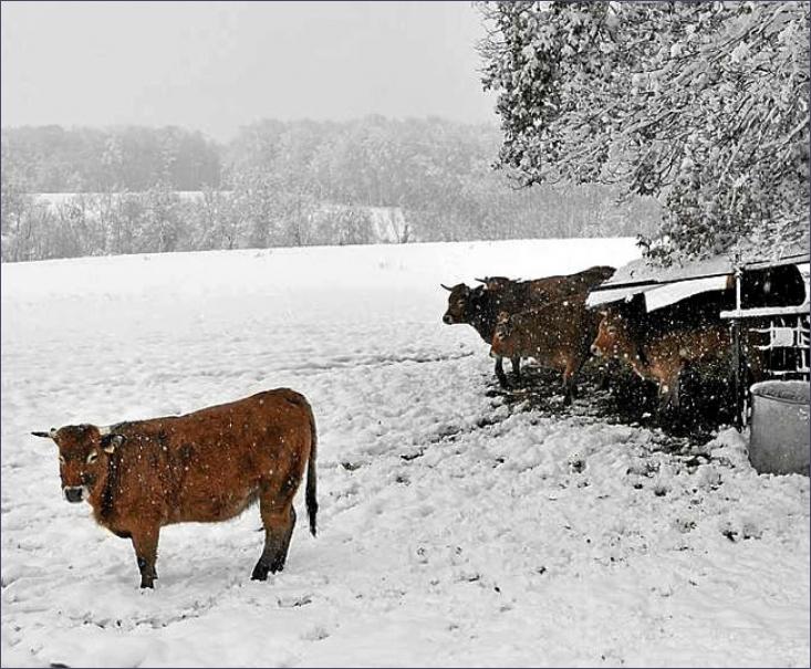 extreme sneeuwval nederland